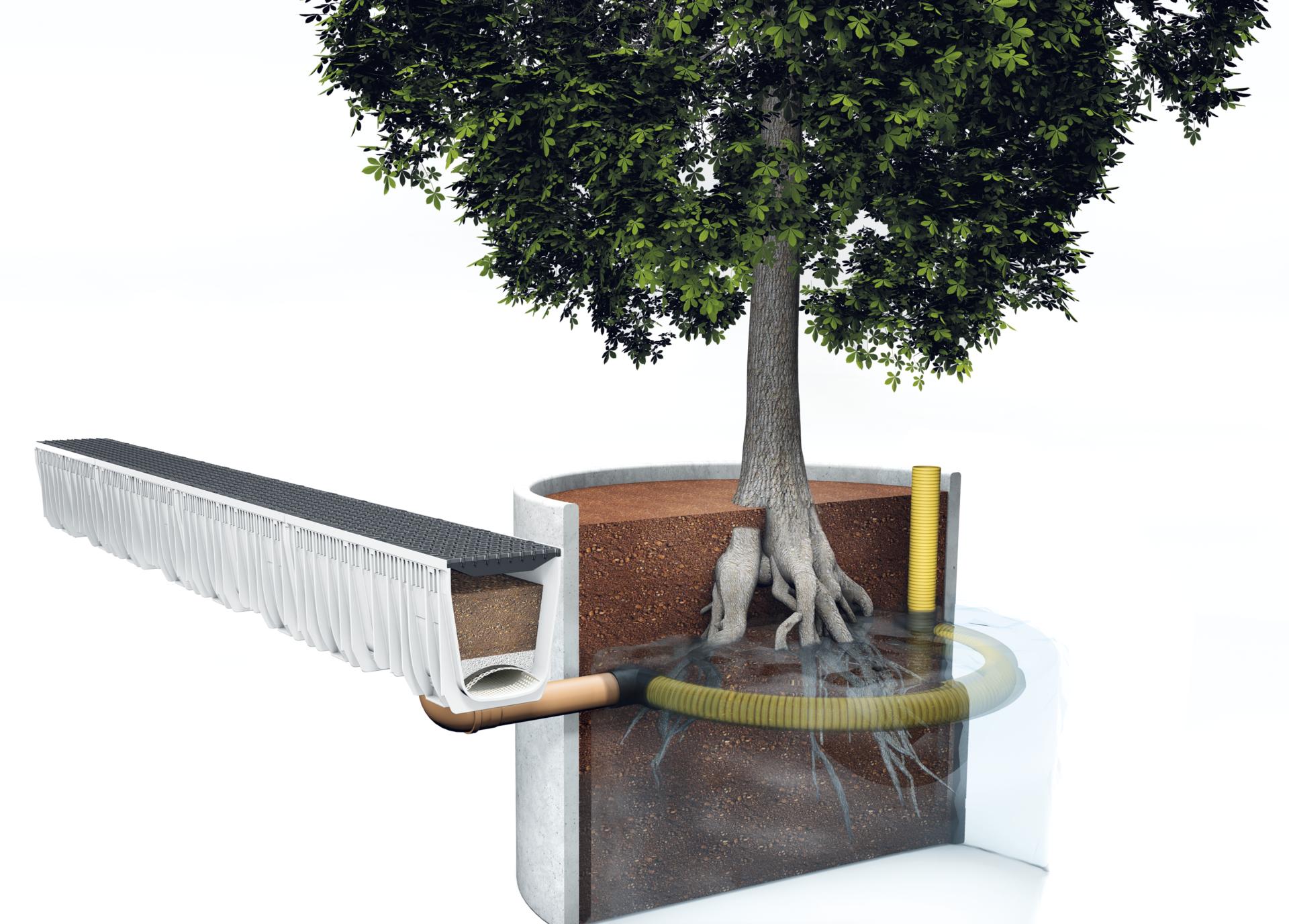 sustainable-tree-irrigation